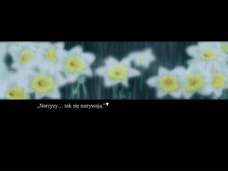 5-narcissu1